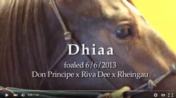 Video of Dhiaa