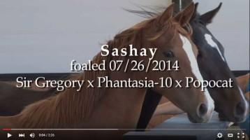 Sashay Video