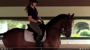 Do You Know about Para-Equestrian Dressage?