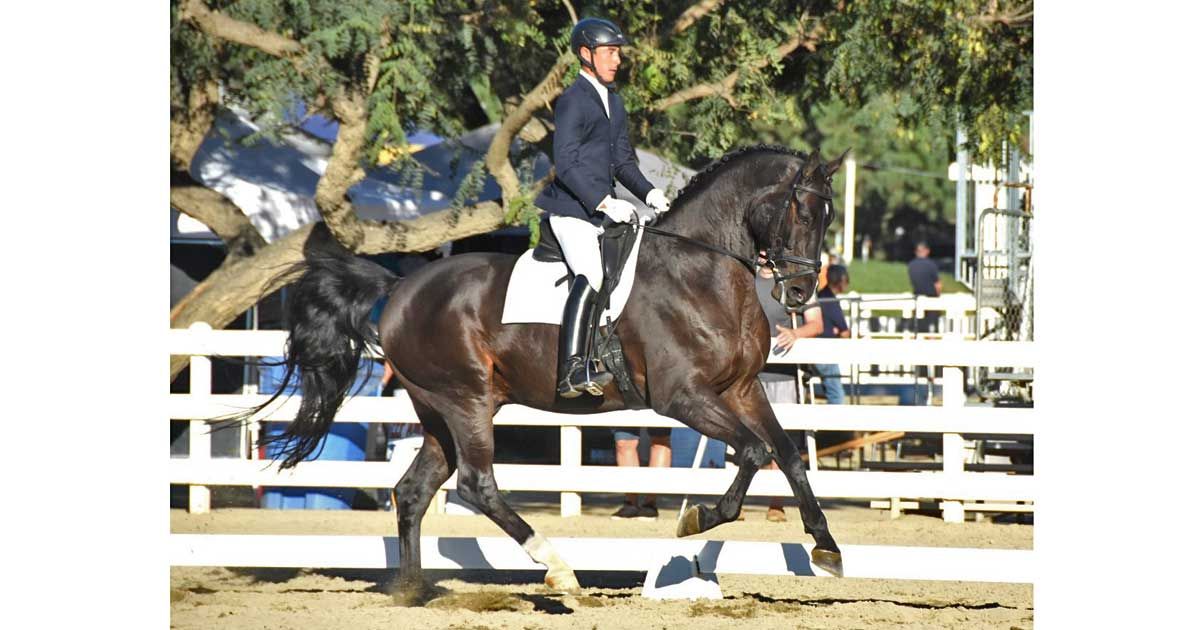 Nick Onoda Dressage Clinic